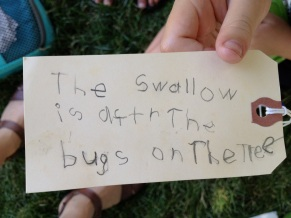 """The swallow is after the bugs on the tree."""
